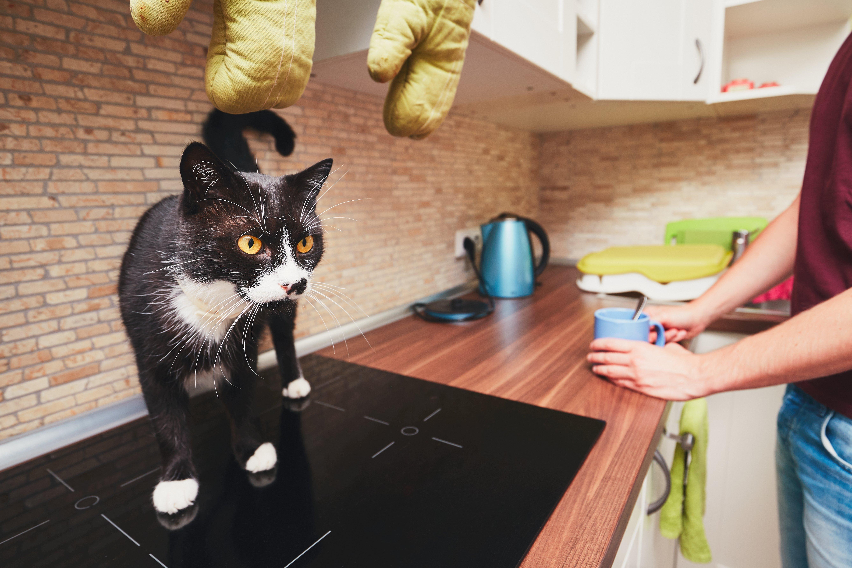 Best Cat GPS Tracker in 2019